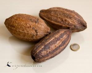 Dekoration 3 echte Cacao Früchte - Natur