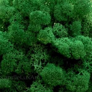 80g echtes frisches Islandmoos Grasgrün