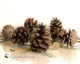 10 echte Kiefern Zapfen Pinus Nigra Handauslese - mittel